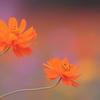 お花畑の二重唱