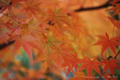 緑残す紅葉景色