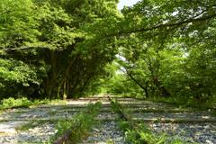 新緑の咲き誇る蹴上インクライン