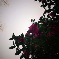 わたしを見下ろす花