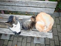 ネコすわりの隣、ネコはベンチで丸くなる♪