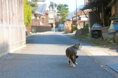 ストーキングされた猫