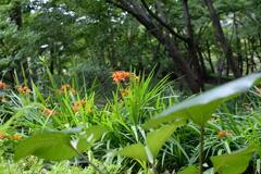 武蔵野の庭園ー2