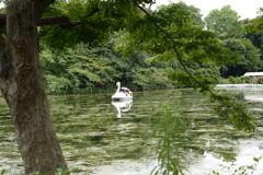 水草が繁茂する池ー1