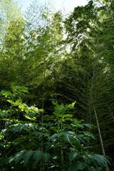 竹やぶ-2
