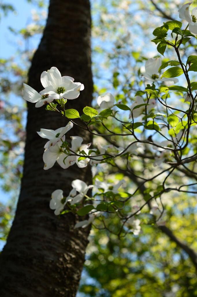 良き春の一隅―1