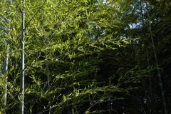 竹やぶー1