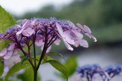 六月の雨―1