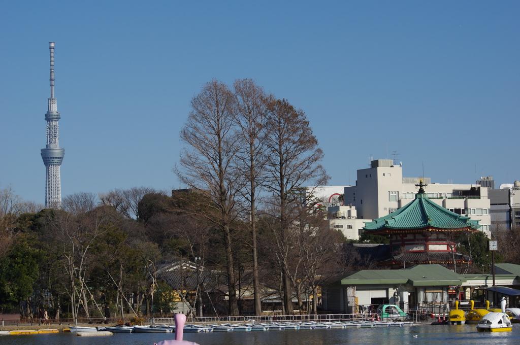 東京スカイツリー@上野恩賜公園