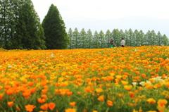 生駒高原にて-1
