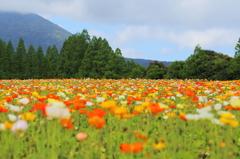 生駒高原にて-2