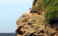 崖に住む鵜