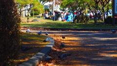 盛岡城址公園の紅葉