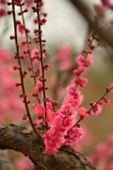 神崎梅園(岡山県)
