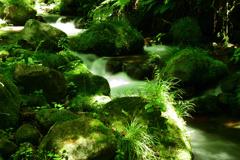 奥大山木谷沢渓流