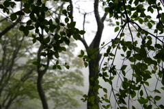 六甲高山植物園(壱拾四)