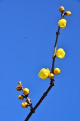 御津自然観察公園(世界の梅公園)
