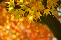 後楽園(岡山県)