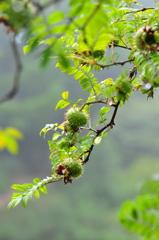 六甲高山植物園(九)