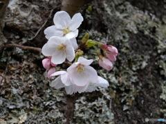 小さい春見つけた