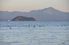 2015.11.12琵琶湖の水鳥