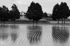 水に写る木々たち