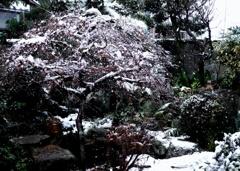 四季を語る庭