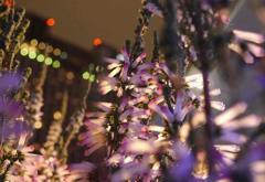 がんばる花