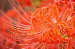 優しい 花
