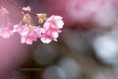 春への覚悟