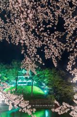 桜 story 3 2015