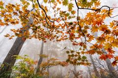 秋・共響鳴