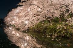 桜 story 2 2015