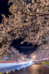 桜 story 4 2015