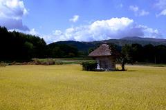 秋晴と黄金色