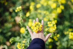 菜花の指輪