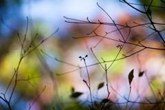 秋の影絵2018
