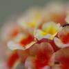 花とあり♪
