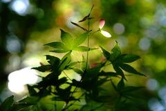 Spring Light
