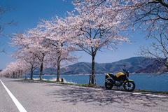 桜道ツーリング