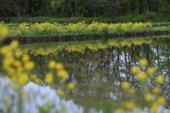 5月の畦畔