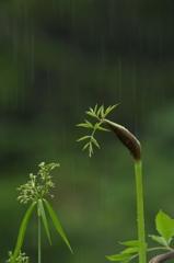 雨の日に こんにちは