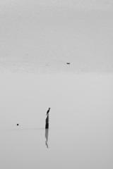 水辺の愁い