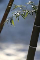 となりの竹
