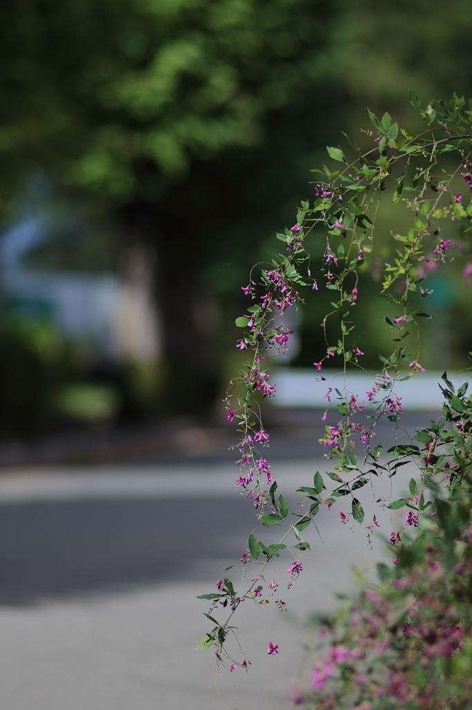 萩の花咲く頃