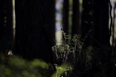 ある日、森の中 その2