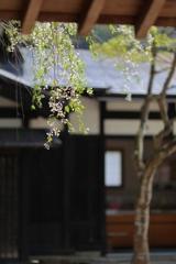 春の喜び Ⅲ