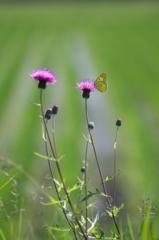 棘のある花