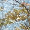 11月の煌めく水面