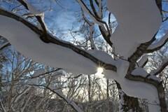 着雪の朝 その2